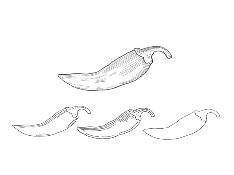 Chilli Illustration Sketches ipad apple pencil drawing detail procreate branding design vintage pencil sketch illustration