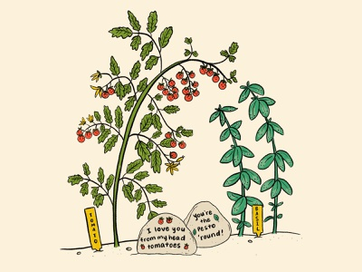 Companion Gardening vegetables gardening garden herbs basil tomatoes tomato plants procreate illustration