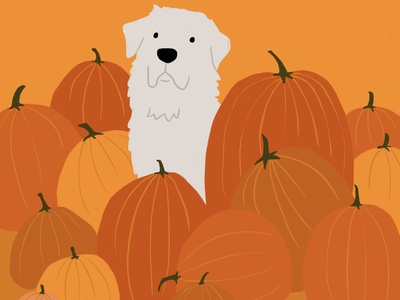 Pup in Pumpkin Patch animals ipad procreate illustration fall october puppy spooky halloween pumpkin dog
