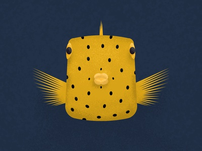 Box Fish marine fish gillustration gillustrations box fish