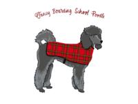 Fancy Boarding School Poodle