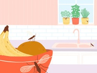 Gnats in the Kitchen