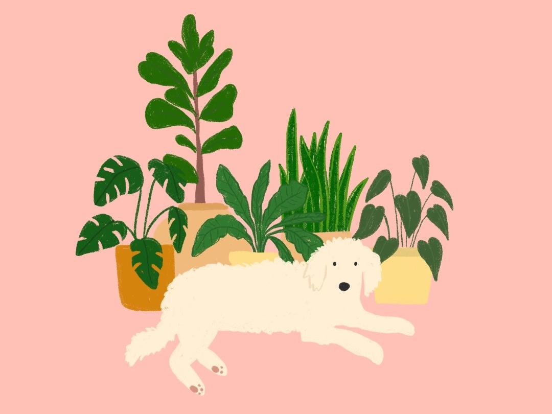 Monty Dog garden monty don dogs procreate plants puppy animals dog illustration