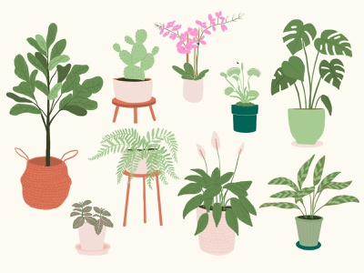 Plants cacti cactus peace lily lily fly trap orchid fern monstera fiddle leaf fig flowers procreate illustration plants