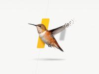 Humming bird for Navitrio.com humming bird bird erik deiner inkod hypera ilan dray navitrio gold pixels skeuomorph dynamic brand shadow fly