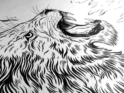 Roarrrrrrrrr inking fur art pen ink roar lion drawing illustration