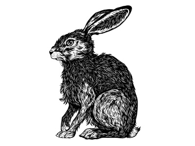 Hare rabbit inking line ink pen nature animal hare drawing illustration