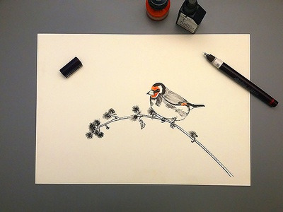 Goldfinch logoflow golfinch ink lineart rapidograph illustration handdrawing drawing