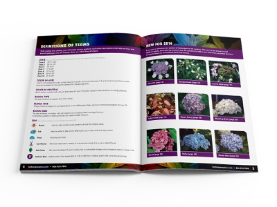 Hydrangeas Plus Catalog Spread 01 catalog design design print design editorial design