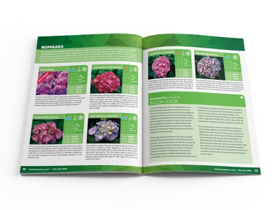 Hydrangeas Plus Catalog Spread 03 catalog design design print design editorial design