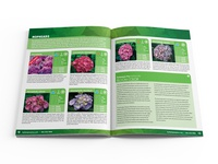 Hydrangeas Plus Catalog Spread 03