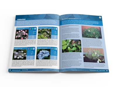 Hydrangeas Plus Catalog Spread 04 catalog design design print design editorial design