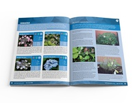 Hydrangeas Plus Catalog Spread 04