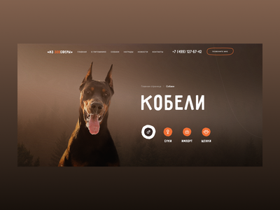 Из Зоосферы - Website Concept dark dog animal minimal clean desktop web ux ui typography design