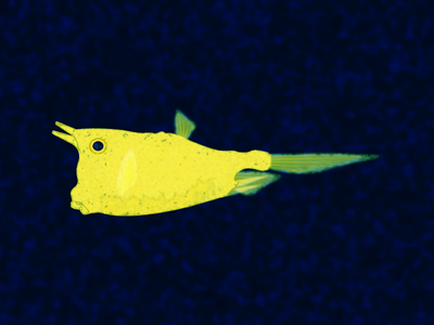 Longhorn Cowfish pez ocean cowfish fish