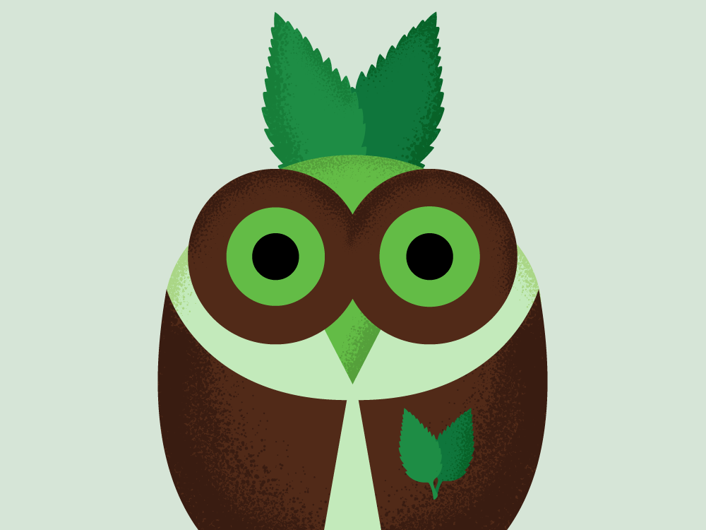 Mindy Mint vector owl illustration graphic design design character animal 2d