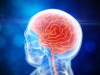 Brain Render