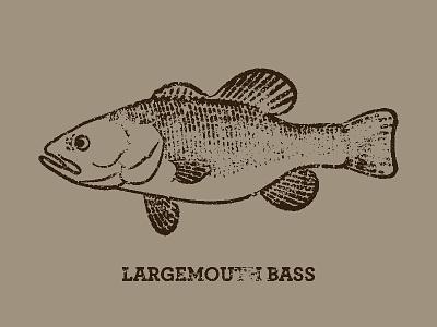 Largemouth scales swim illustration drawing anatomical encyclopedia anima bass fish rough stamp texture
