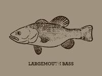 Largemouth