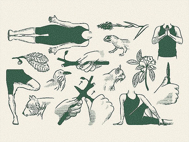 Field Guide fauna flora bobcat raven bear spot field notes print figure scout book how to animals plants halftone field guide vintage texture illustration rough