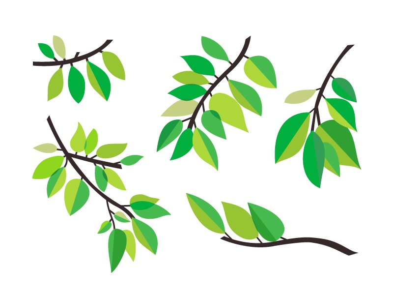 Assorted Leaves nature green illustration leaves assorted