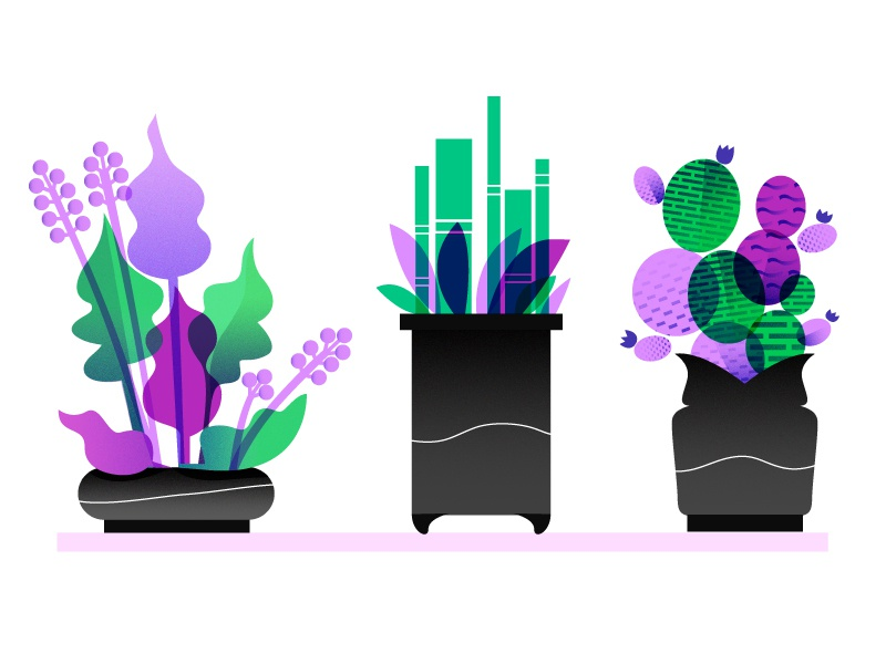 Purpley Greens flowers cactus bamboo pots illustration vector plants