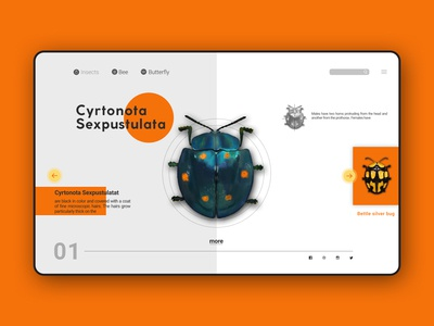Insect WEB UI/UX