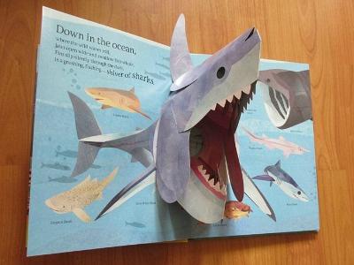 'Animals Everywhere' Children's Wildlife Pop-up Book pop-up book animals collage childrens book sharks