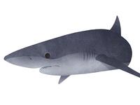 NYC Aquarium 'Ocean Wonders: Sharks' Exhibit