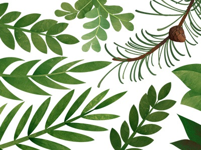 Foliage leaves foliage ferns collage trees branches