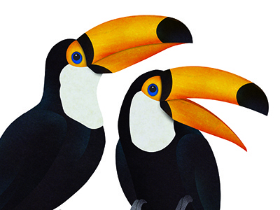 Toucans birds toucan rainforest digital collage