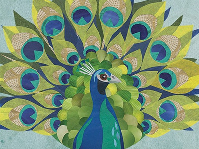 Peacock illustration birds collage peacock