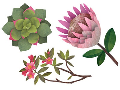 Botanical Illustrations nature illustration collage botanical flowers