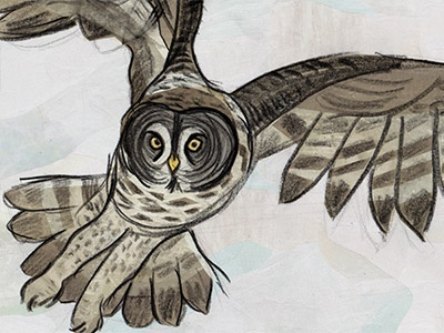 Great Grey Owl birds wildlife nature owl collage