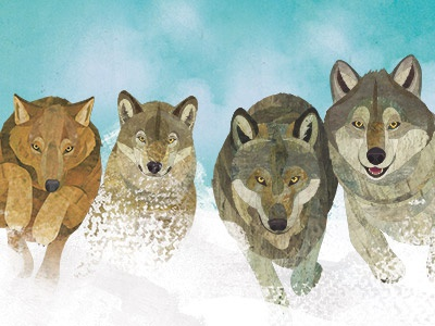 Ways Of The Wolf - interior spread illustration childrens illustration wildlife collage illustration wolf