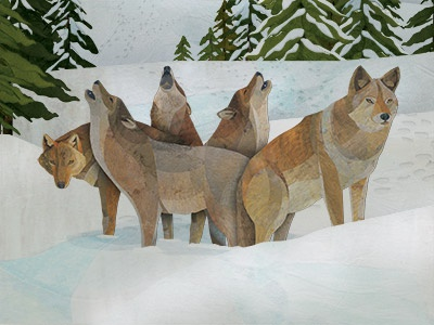 Ways Of The Wolf - interior spread illustration detail childrens illustration wildlife collage illustration wolf