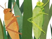 Spring Fling 2013 Cover Final Illustration