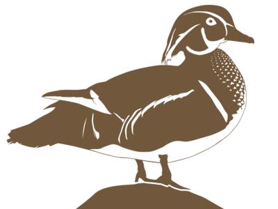 Wood Duck (aix sponsa) - Male vector silhouette portfolio minimal illustration flock ducks duckling draw branding bird animal