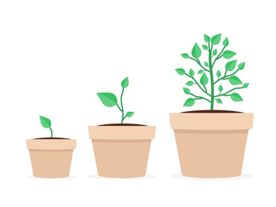 Flat Plants plants design illustration