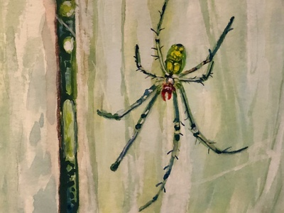The Whole World is a Garden - 2 web arachnid spider spring wildlife nature watercolor painting illustration gouache