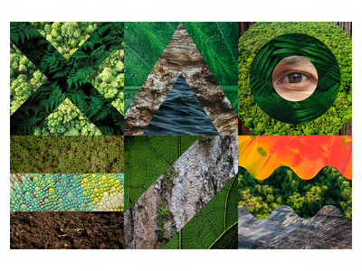 Rainforest vibes leaf forest eye water tree jungle collage photo