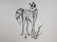 'Grace in Greys' - animal illustration