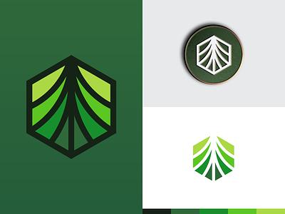 Coingrow branding identity logo hexagon arrow up coin grow plant tree crypto grow coin