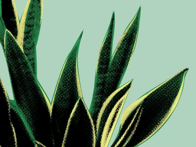 Mother In Laws Tongue vector texture plant illustration snake plant