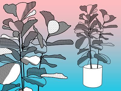 Fiddle Leaf Fig Tree vector texture fiddle leaf fig tree plant illustration