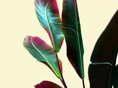 Neon plant rendering render color neon colors plant light neon design cinema4d cgi 3d