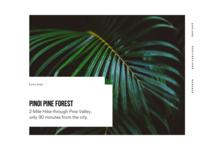 Pinoi Card