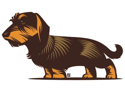 Illustration dog illustration dog animal t-shirt vector typography dachshund screen printing