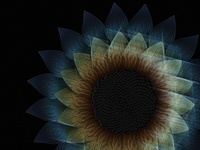 Birth of a virtual sunflower