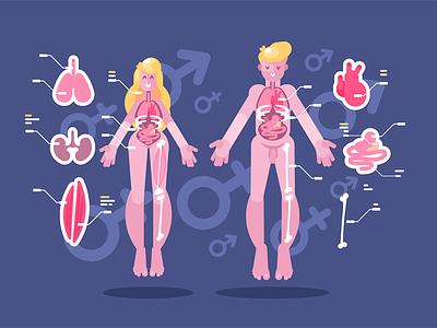 Anatomy of human body character organ internal bodies woman man body human anatomy kit8 flat vector illustration
